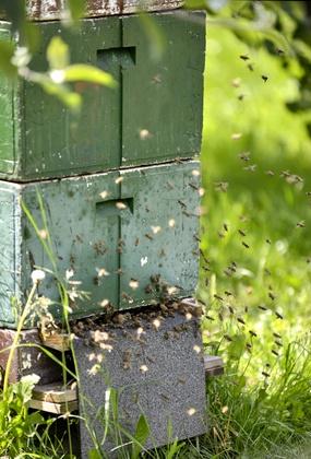 Ruche, protection des abeilles chez Pulpe de vie
