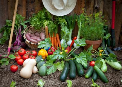le produit de beauté bio fabriqué avec des légumes frais du jardin - Beauty Garden