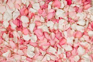Pétales de rose délicatement parfumées