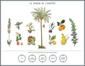 Les plantes utilisées par L'ODAITES - Jardin des sens
