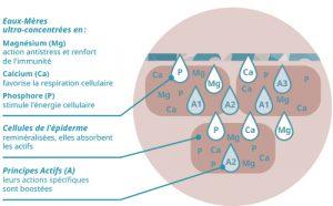 Schéma du principe isotonique osmoactif -Guérande cosmétiques sur Doux Good