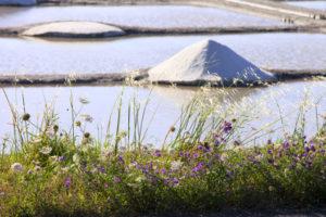 Marais salants de Guérande et les cosmétiques marines