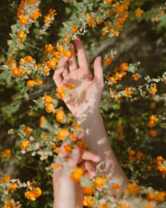 la nature mise en jus pour les parfums La Brumée